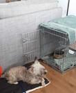 Hondenbench kleine honden