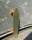 "Cruiser board 68cm ""Big Yamba"""