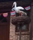 Ooievaar op nest voor aankondiging geboorte