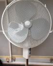Ik heb 2 staande en 1 tafel ventilator te huur. 1 ventilator 5 euro per dag. Een of twee extra kost 2,50 extra.