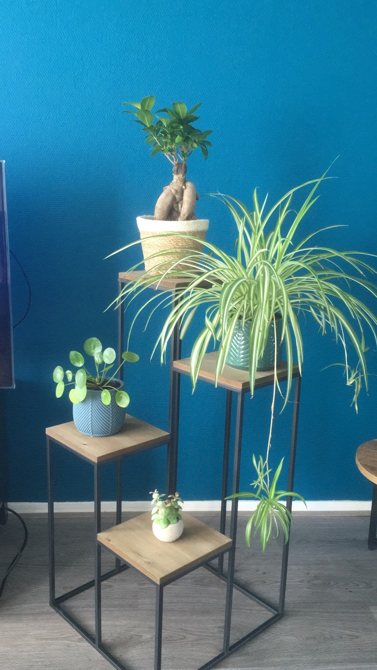 Planten oppas