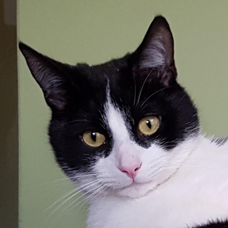 Bert mijn kat is vermist !