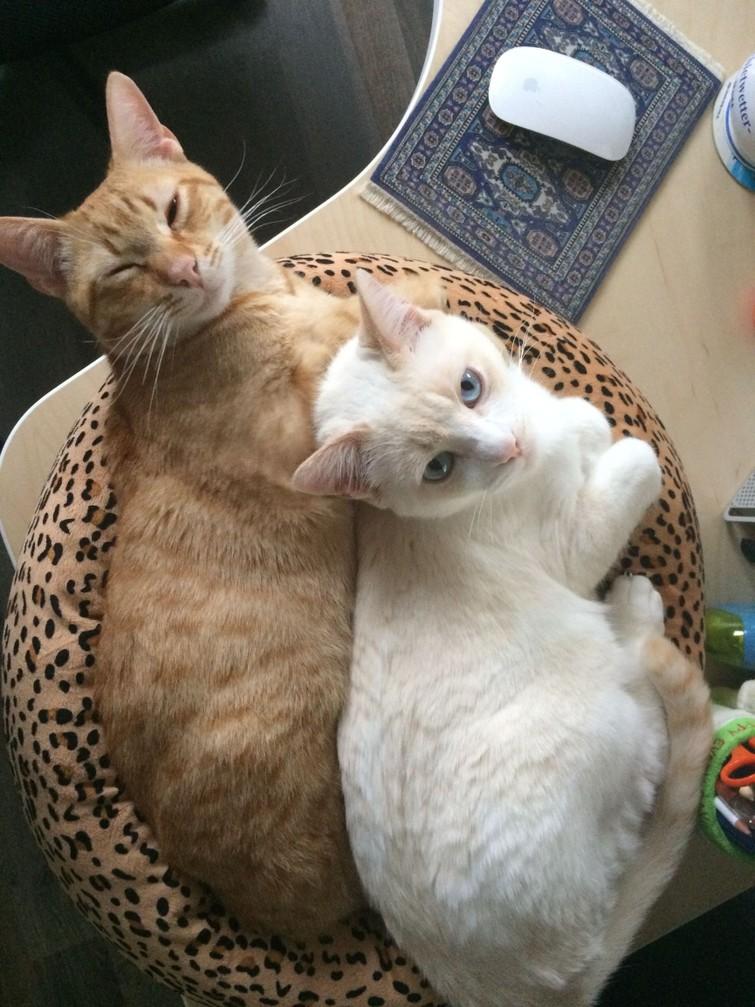 Kattenoppas aan huis in Deventer