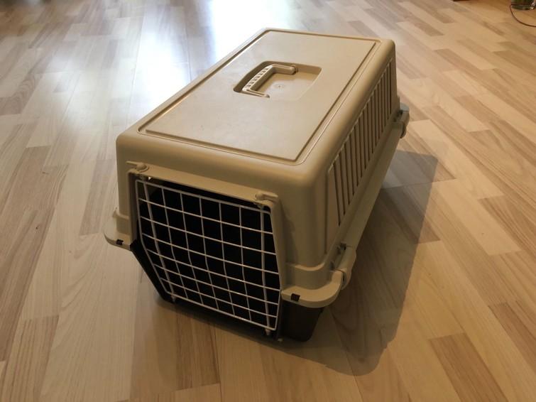 Reismand voor kat