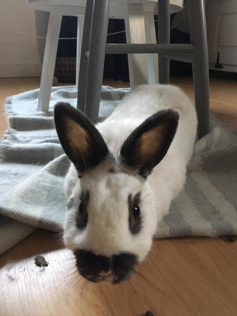 Vakantie opvang konijnen