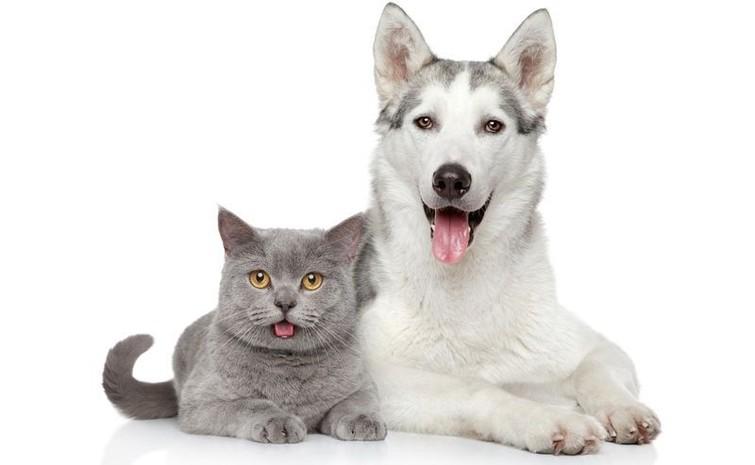 Oppas voor kat of hond