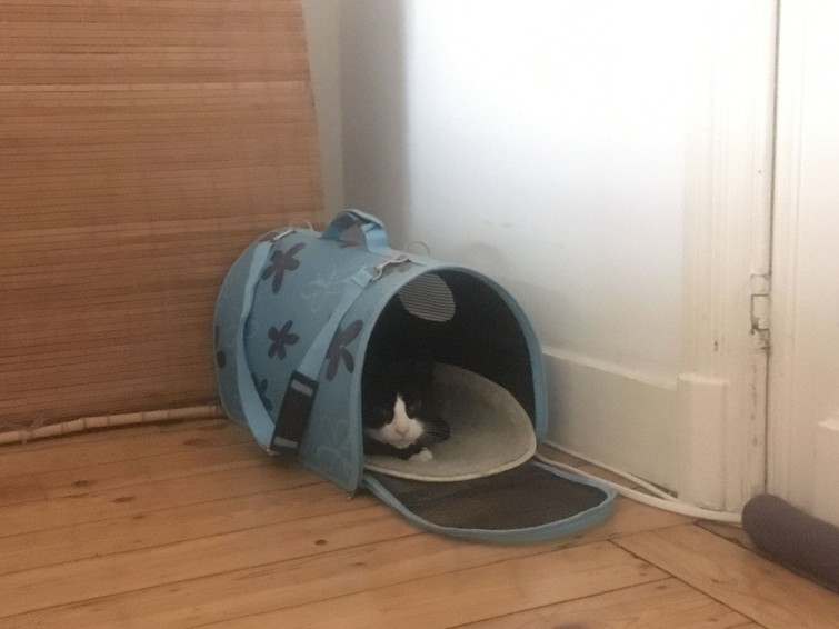 kattentransport